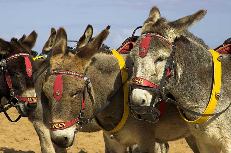 Skegness beach donkey