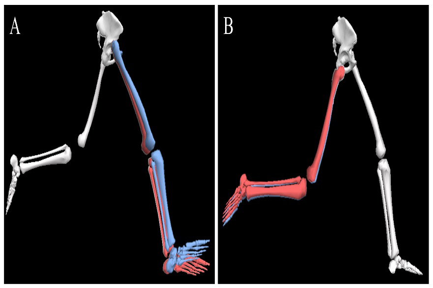 Leg position during running
