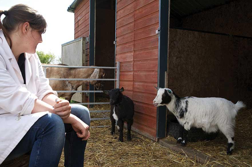 Student with goats at Brackenhurst