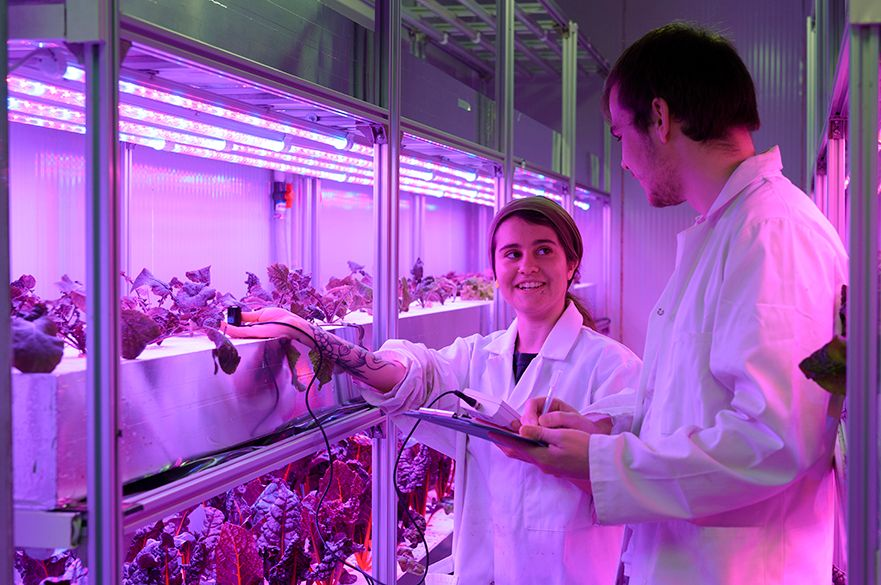 Student looking at crops in vertical farming unit
