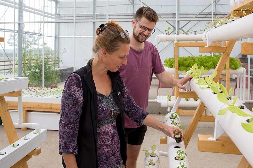 Vertical farming in greenhouse