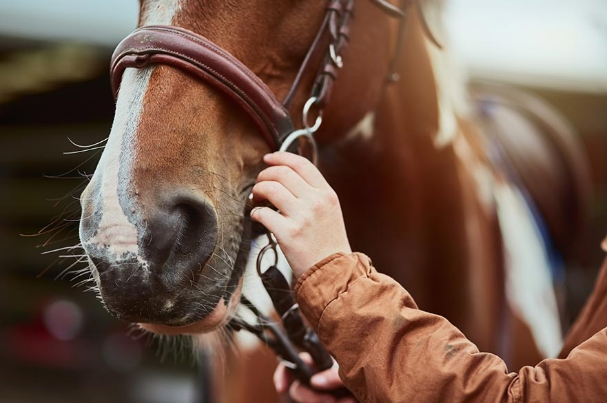 The clinic will offer free legal advice on equine law issues including horse passports, sale and purchase disputes and land disputes.