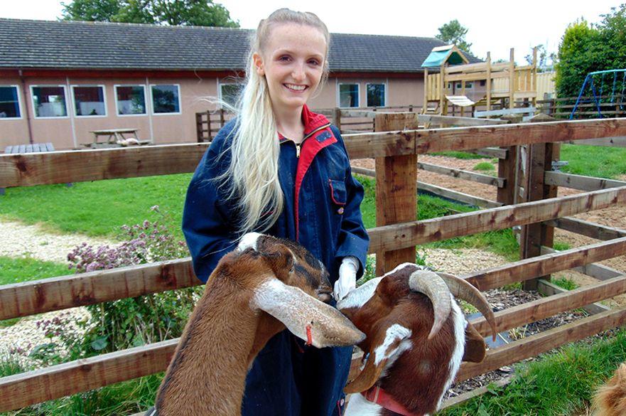Student feeding goats