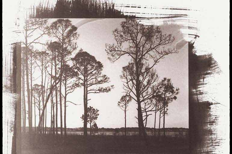 Saltprint of trees