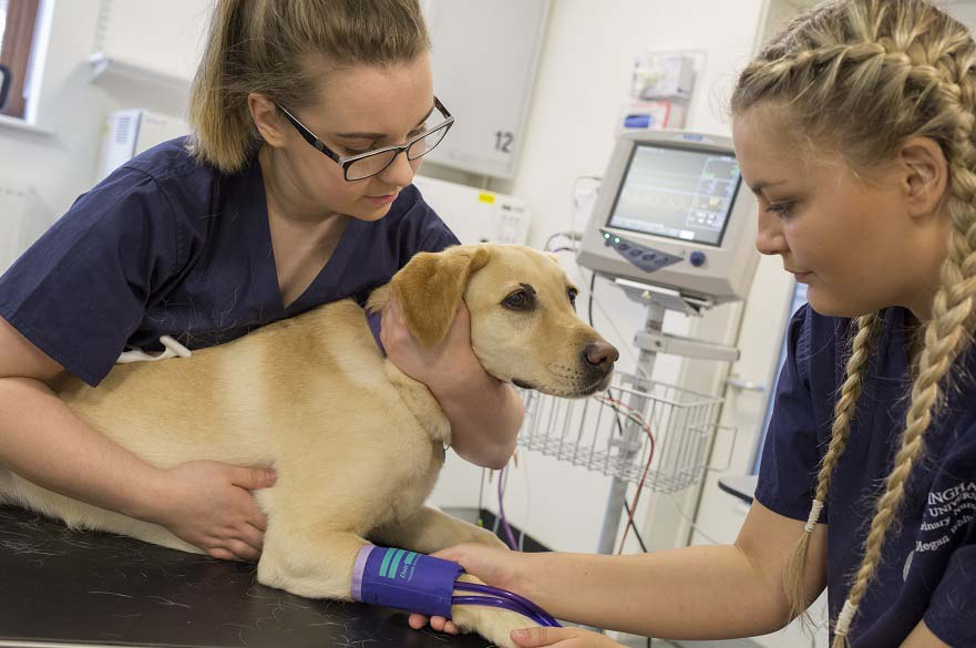 Vet Nursing students with dog