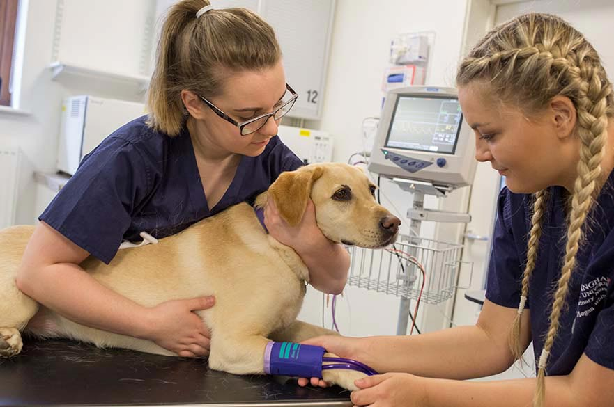 Veterinary Nursing students assessing a dog