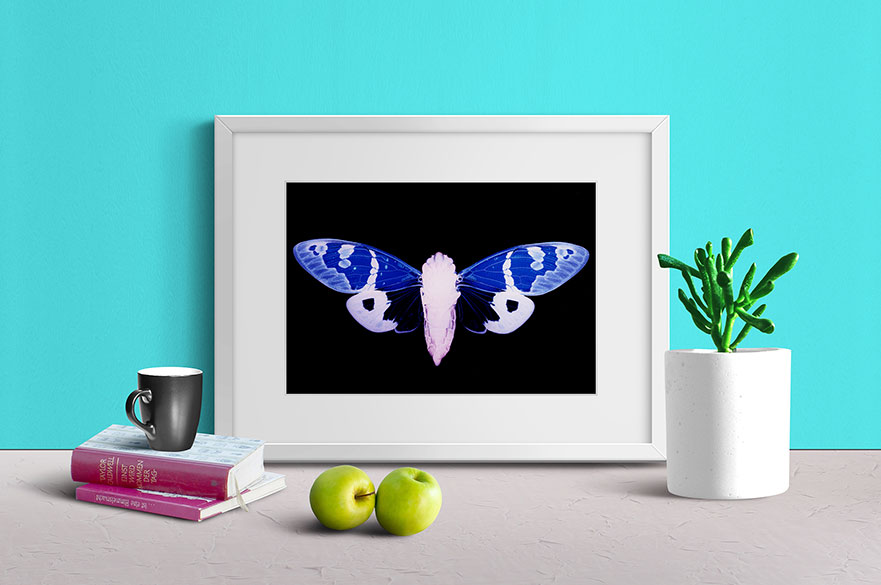Cicada photogram in frame