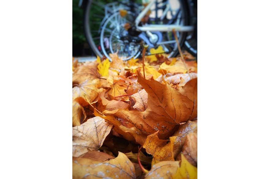 Leaf Cycle
