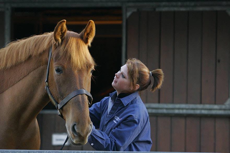 Woman patting horse
