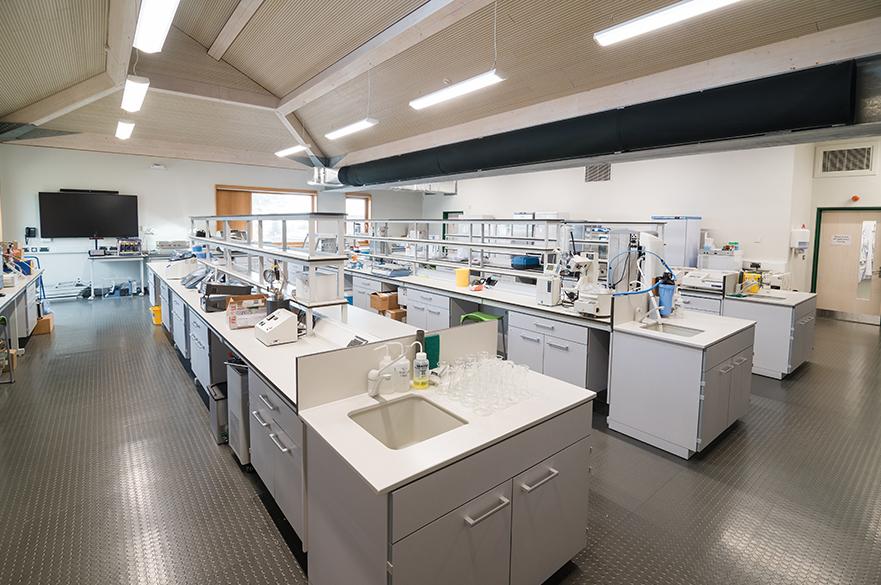 Brack labs