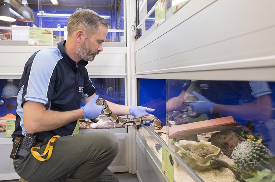 Staff member feeding animals