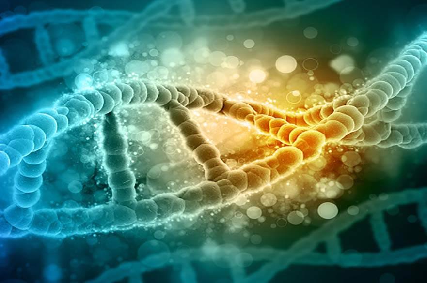 SPAG5 gene