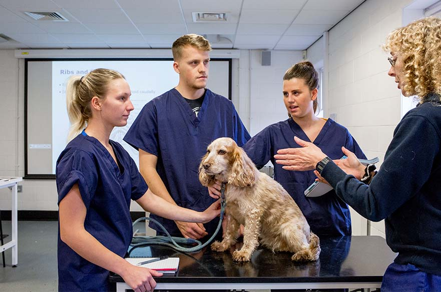 Image result for veterinary nurse
