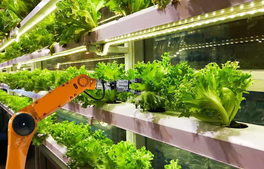Vertical Farming Forum