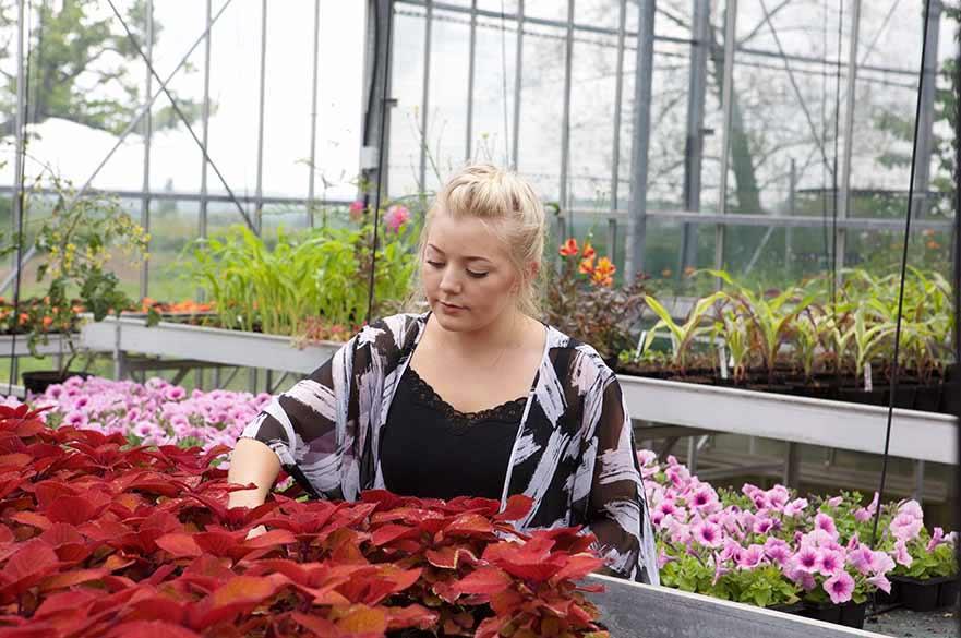 Glashouse complex plants