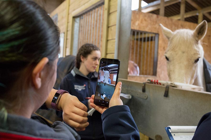 Student undertaking equine research