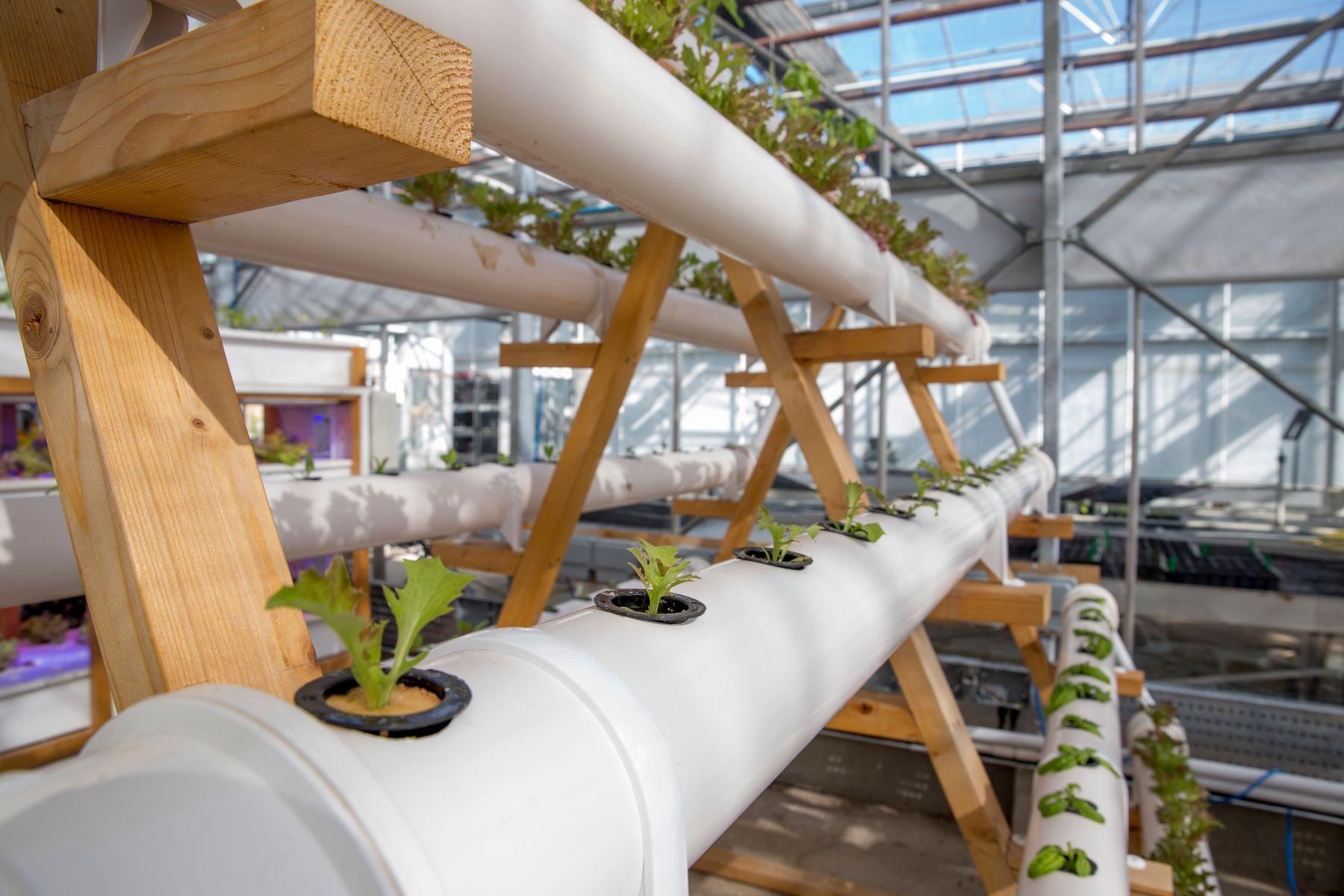 Vertical farming facilities