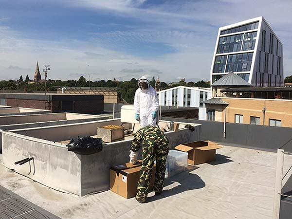 Chris Pryke-Hendy and Nigel Smith place the bee hives on Chaucer roof