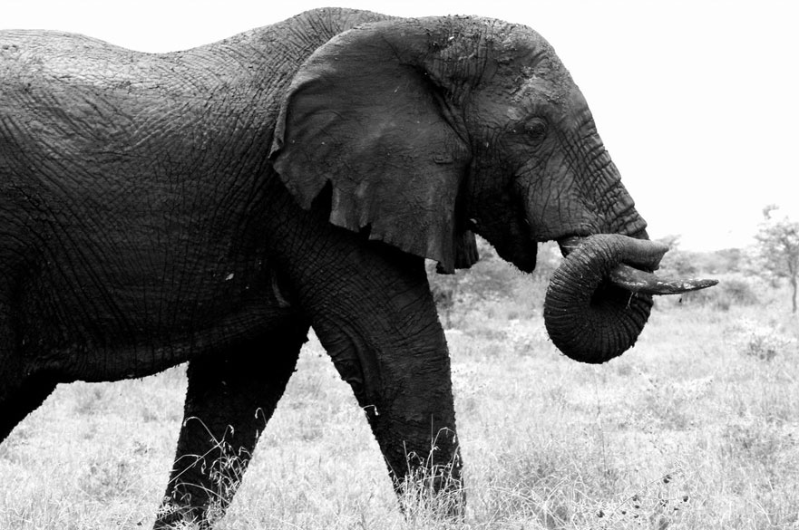 Laxmi Aggarwal - A Market Reduction Approach to Illegal Ivory Markets in Tanzania