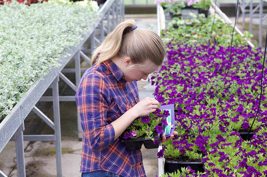 Examining flowers in the Glasshouse complex