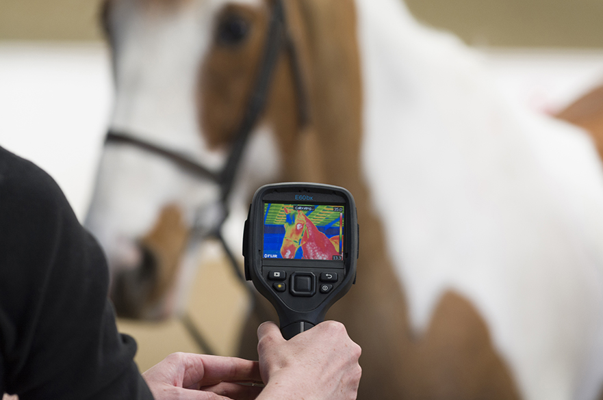 Student using thermal camera on horse