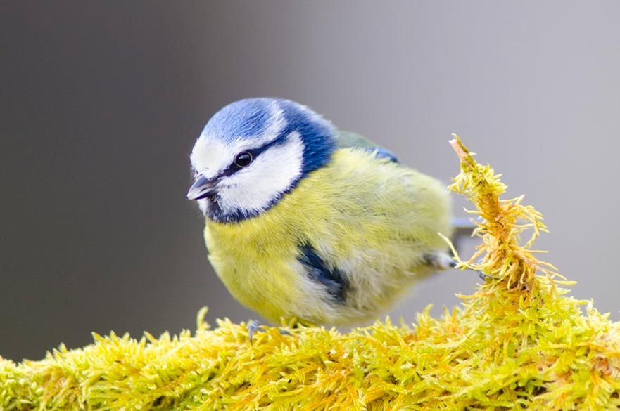 Wildlife Photography - Spring