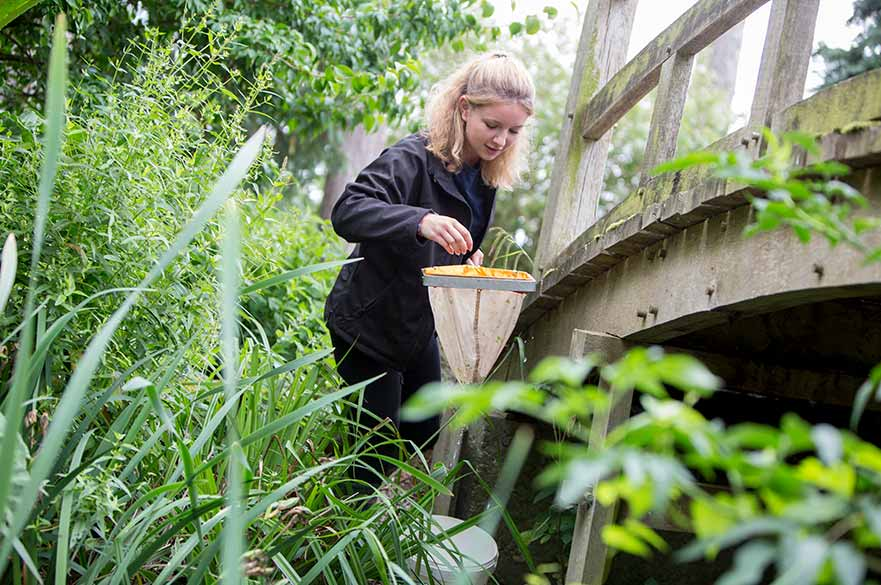 Pond dipping at Brackenhurst Campus