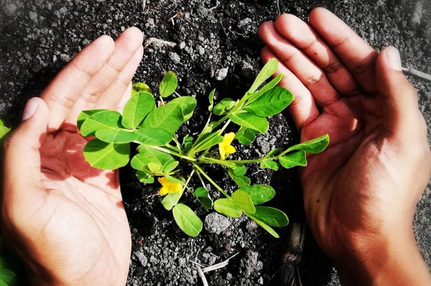 Dinish Nadaraja - The Human Touch in Plantation Agriculture