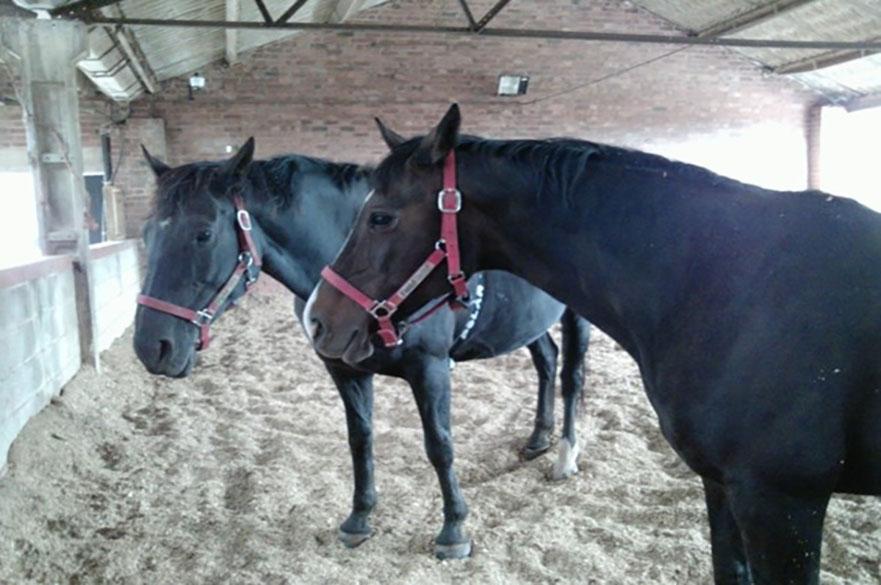 Horses standing in Paddock